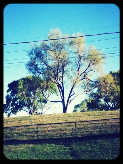 Sitting Outside Looking At Trees.