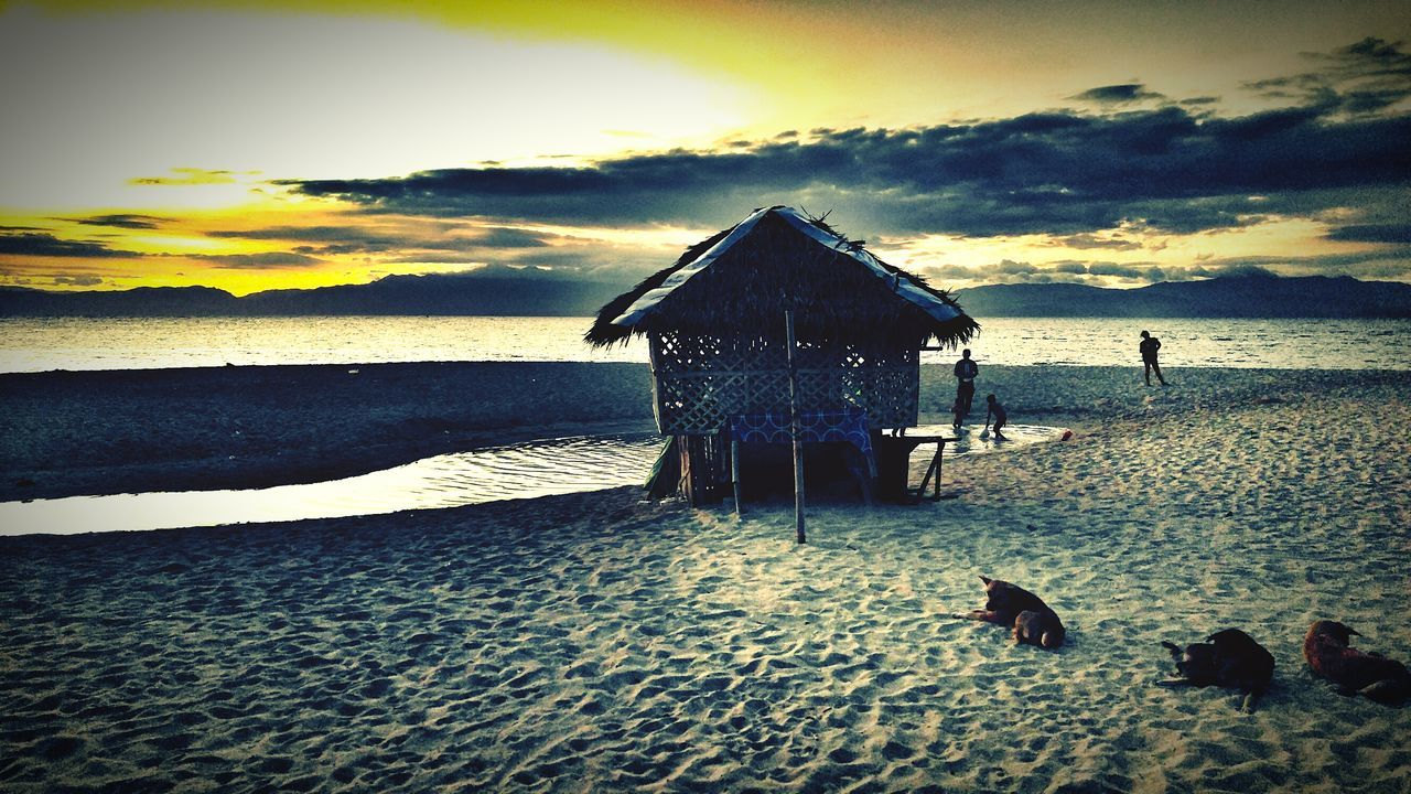 Dog Relaxing On Sandy Beach During Sunset