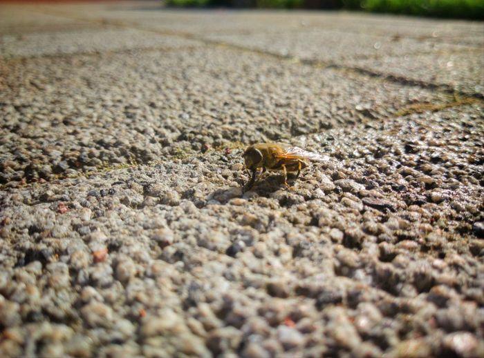 Animal Themes Reptile Animal Fly Closeup Stones Close Closeview Photography Animalphotography Close-up Insect Wild Animal Summer Exploratorium