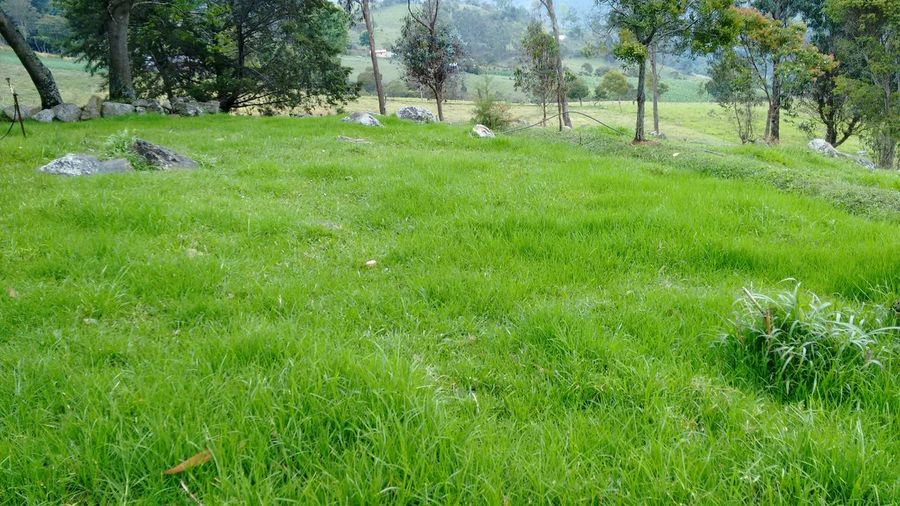 meadow Grass Green Color Growth Tree Nature No People Outdoors Day Meadow Green Meadows Farm Green Meadows Beauty In Nature Animal Themes Golf Course Mid Kikuyu Green Color Grass