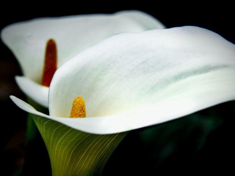 Nature Arboretum Ucdavis Spring California Blooming In Bloom