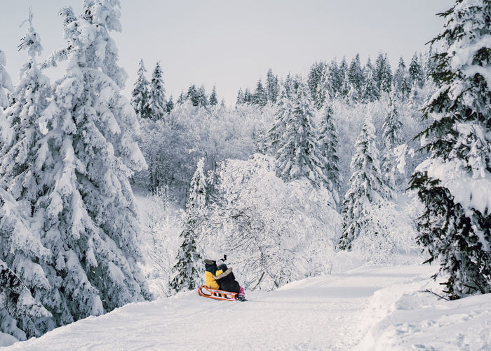 Rear view of people sitting on sled taking selfie amidst snow covered trees