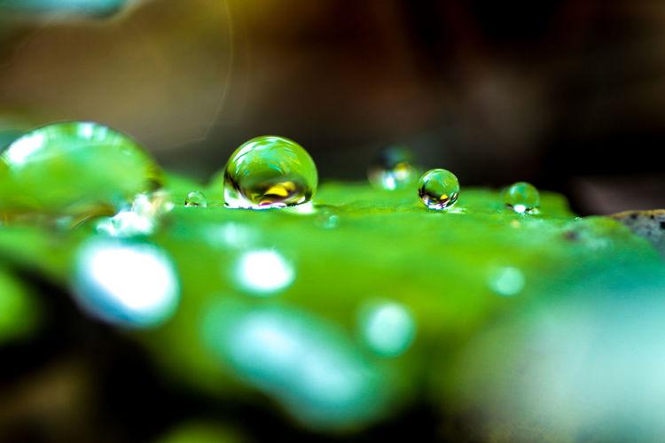 Gocciedipioggia Green Color Natural Beauty Nella Natura Prato Bagnato Riflessi D'acqua Rugiadamattutina Verde Acqua