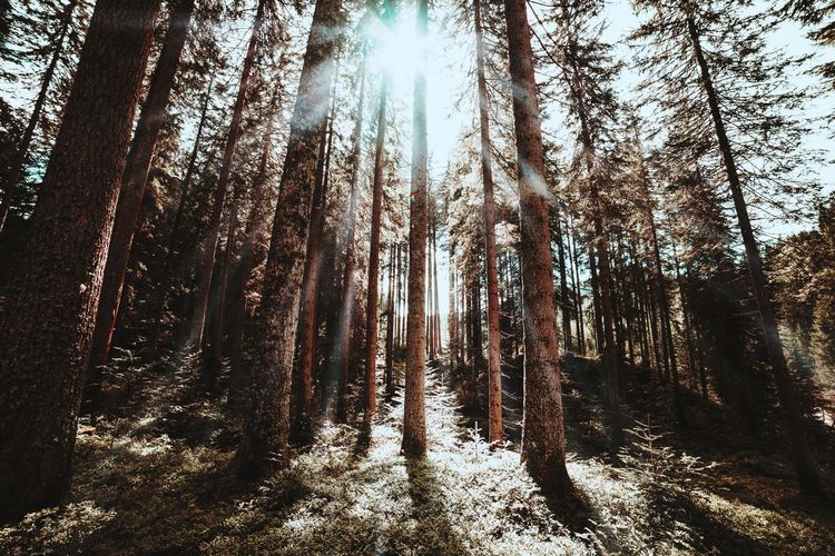 Tree Forest Nature Low Angle View Day No People Outdoors WoodLand Beauty In Nature Tranquility Tree Trunk Growth Sky Branch Scenics The Week Of Eyeem Landscape Nature Beauty In Nature Tree Sunlight Summer