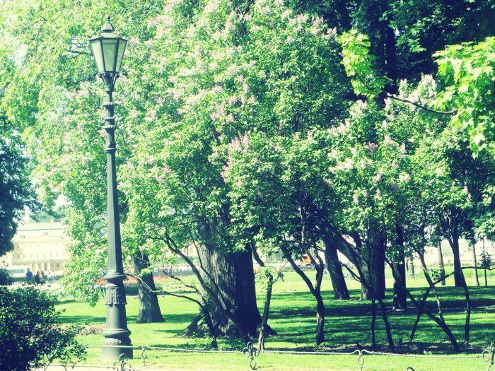 Прекрасное утро красота Beautiful Day No People Beautiful Nature Beauty In Nature Nature Весна💐🌷🌿 Природа весна Beautiful сирень