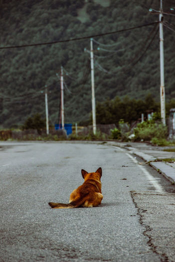 Cat lying down on street