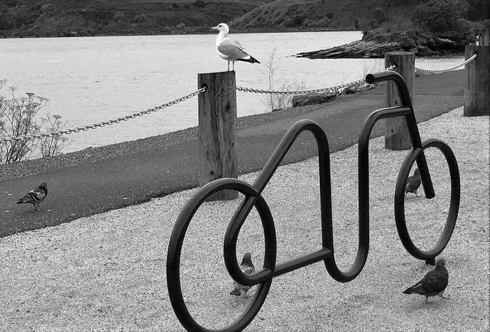 Bike Rack black and white photography Pacific Ocean Pigeons sea gull Nature Benicia Pier CA Going somewhere?