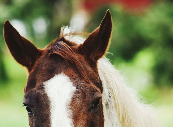 A horse is a thing of beauty. please provide feedback. Taking Photos Check This Out Horse Horse Photography  Horse Life Horse Love Nikon Nikonphotography NIKON D5300 Nikon D5300 Photographer First Eyeem Photo Fresh On Eyeem  Beauty In Nature The Week Of Eyeem Nature Woodburn Oregon