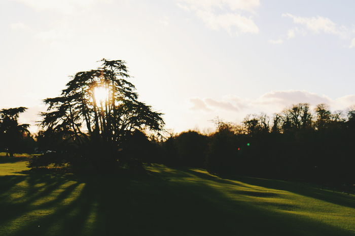Leeds Castle sunset Scenics Beauty In Nature Landscape Grass Tree Area Tree Tranquility Tranquil Scene Nature No People Sky Outdoors Growth Sunlight Day