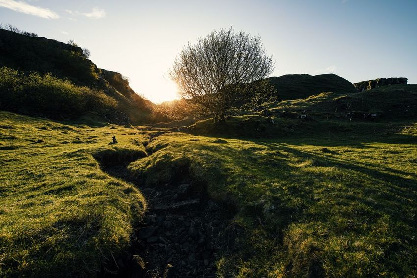 Fairy Glen Magical Scotland Uig Field Grass Green Color Landscape Magical Places Nature Outdoors Plant Rolling Landscape Shadow Sunlight Sunset Tranquility Tree The Great Outdoors - 2018 EyeEm Awards