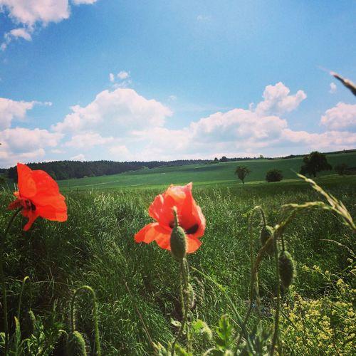 Thüringen im Frühsommer, mehr geht nicht