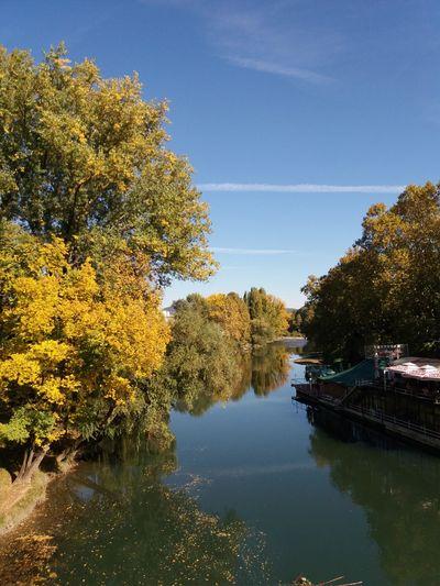 Nature has given its effects already Colors Of Autumn Throwback Banja Luka Vrbas Nofilternoedit Banjalučki Splav Tree Water Lake Reflection Sky Idyllic Tranquility Non-urban Scene