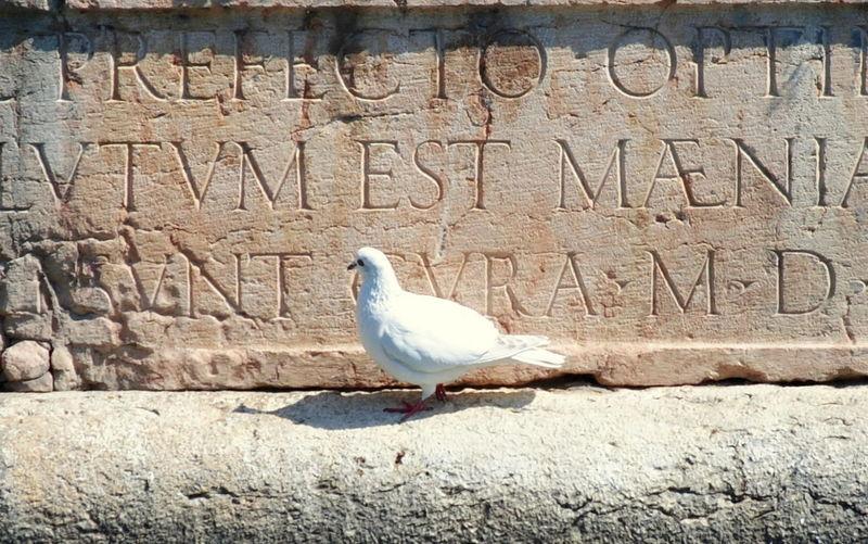 Particolare con la scritta dei proveditori veneziani, sul bastione Tognon della fortezza di Peschiera Del Garda