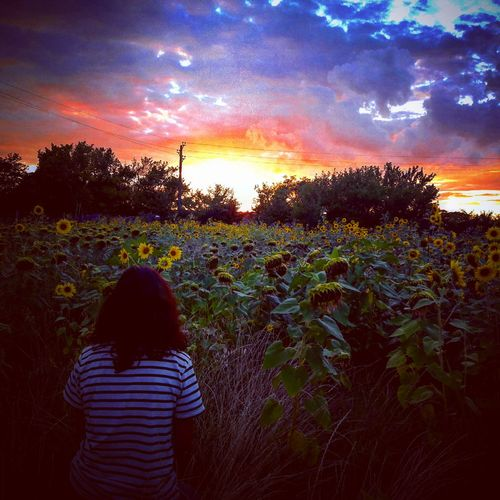 Photography Sunset Agriculture Cloud - Sky Rear View Child One Person People Sky Plant Rural Scene Growth Outdoors Children Only Nature Adult Women Day Sunflowers🌻 The Week On EyeEm