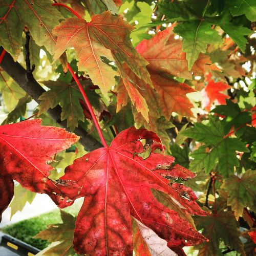 Love this time of the year with beautiful Autumn colours everywhere Enjoying Life Autumn🍁🍁🍁 Autumn Leaves