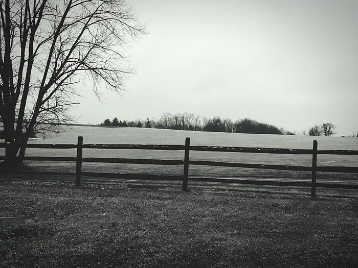 Pennsylvania Tree Tranquility Nature Tranquil Scene No People Bare Tree Day Outdoors Field Beauty In Nature Sky Landscape Scenics