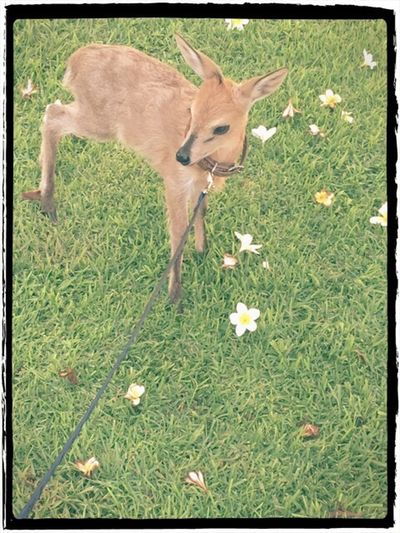No People Mammal Pets One Animal Grass Nature Outdoors Duiker Anthelope