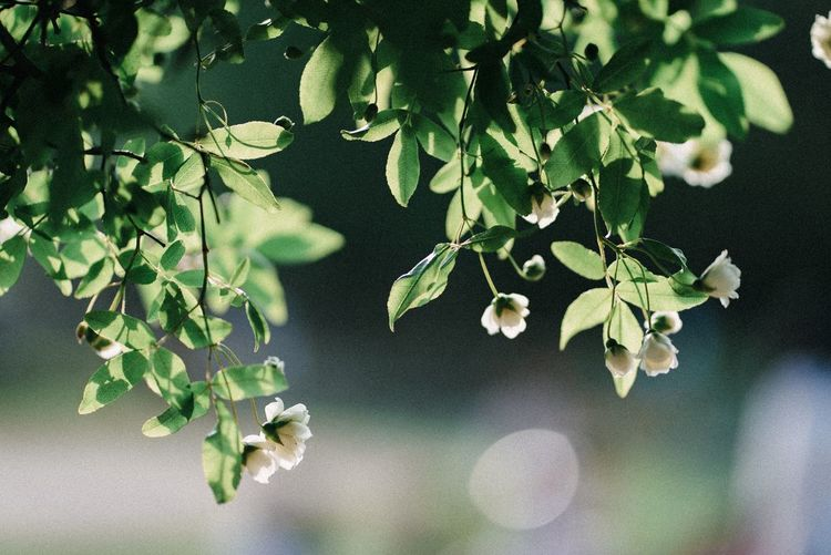 Leaf Plant Part Plant Growth Green Color Nature No People Freshness Branch Outdoors Vulnerability  Fragility High Angle View Water Close-up Sunlight Tranquility Beauty In Nature Tree Day
