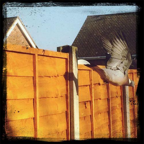 Pidge Earlybird NatureYouGuys