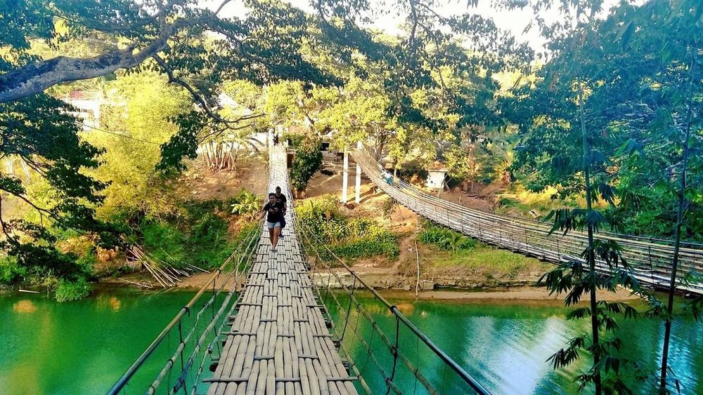hanging bridge Water Tree Real People Nature Day Full Length One Person