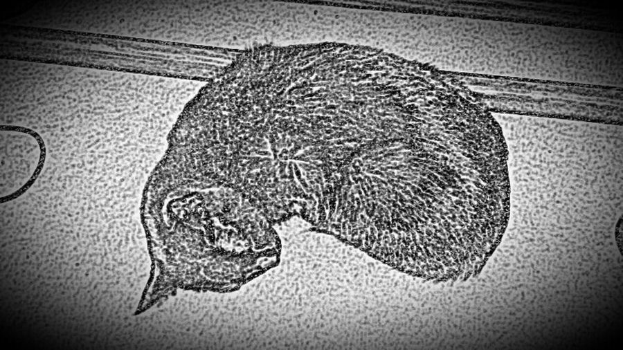 I Love My Cat! Eyem Gallery Sketching Taking Photos Check This Out Hanging Out Catoftheday Sirius Black The Cat. He's Enjoying His Life As Well Good stuff!