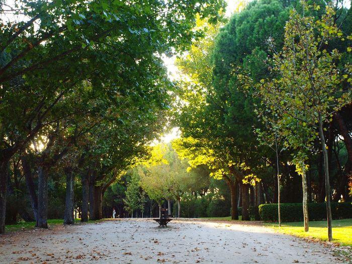 Tree Outdoors Beauty In Nature Sunlight Illuminated Autumn Park Relaxation Sunbeam