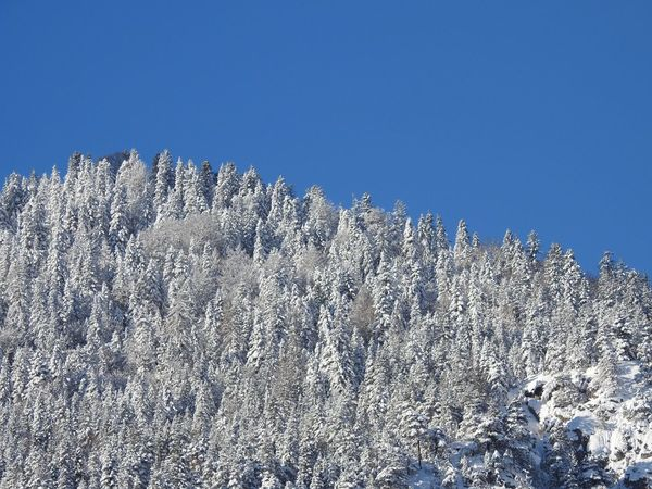 Beauty In Nature Blue Clear Sky Cold Temperature Copy Space Day Growth Nature No People Outdoors Scenics Snow Tranquility Tree Winter