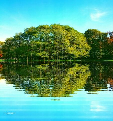 Water Reflections Taking Photos Enjoying Life Greenery Relaxing Our Best Pics From My Point Of View Eyem Nature Lovers  Eye4photography  Check This Out Edit Photo Nature Nature_collection Treescollection Trees Tree_collection  Reflected Glory EyeEm Best Shots Sky Sky_collection Summer Memories...