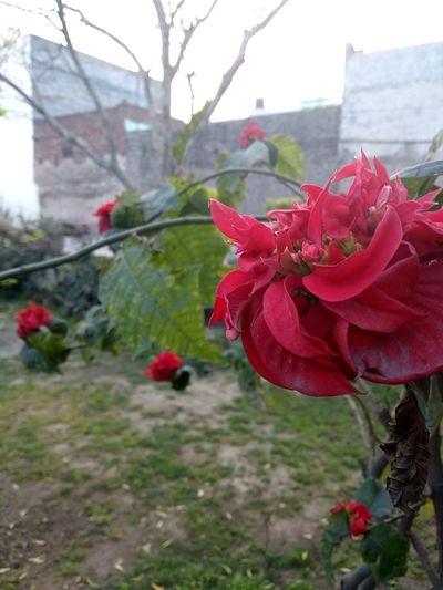 Peony  Stamen Pistil Plant Life Lily Calla Lily Day Lily Botany