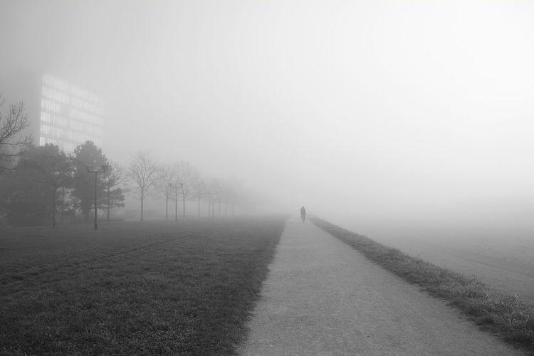 Fog Plant