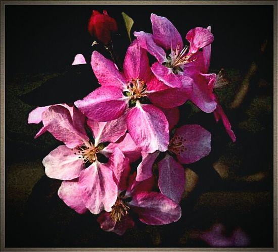 Floralperfection Flowers Pink Flower
