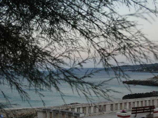 Mare Tramonto Apuglia Beach Horizon Over Water Italy Panchinavuota Tree Water