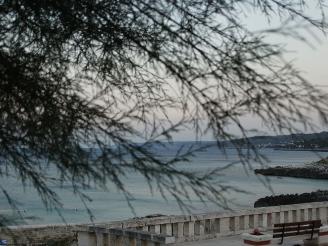 Mare Tramonto Apuglia Beach Horizon Over Water Italy Panchinavuota Tree Water