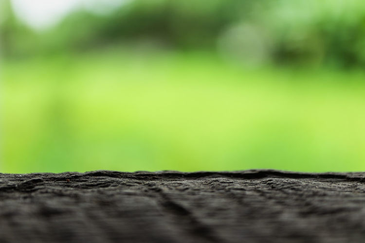 Backgrounds Beauty In Nature Close-up Copy Space Day Extreme Close-up Full Frame Green Color Growth Macro Nature No People One Animal Outdoors Pattern Plant Selective Focus Small Textured  Tree Wood - Material
