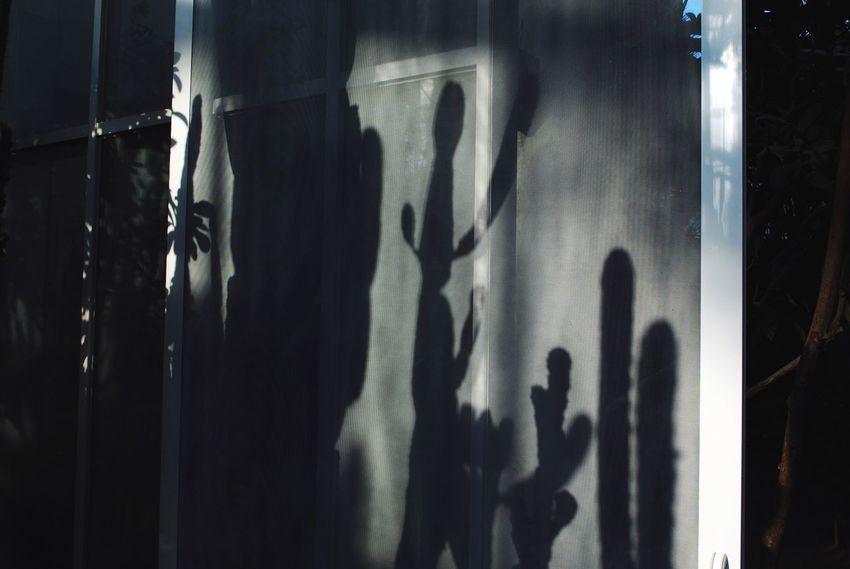 Botanical Gardens Illuminated Cactus Shadows & Lights