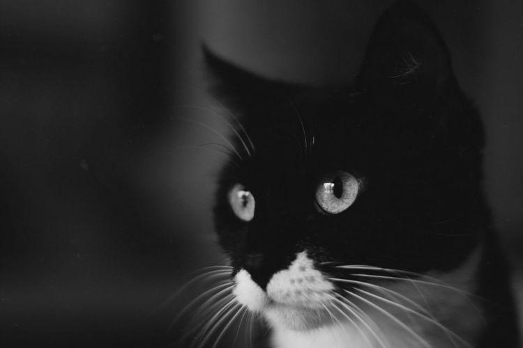 Pets Black