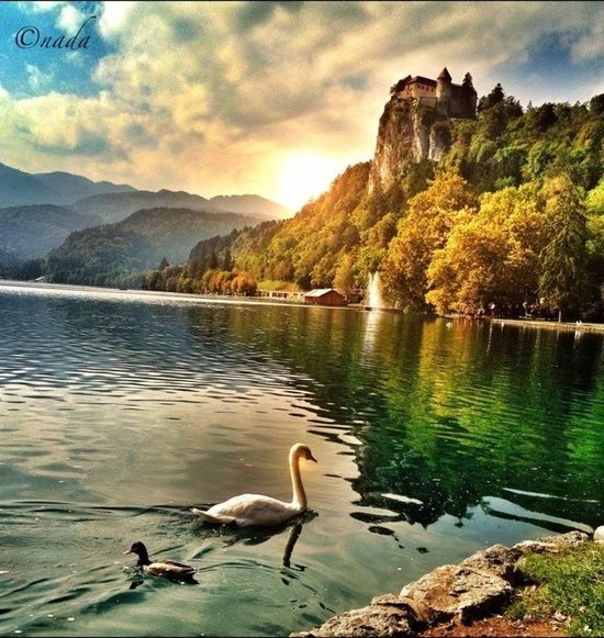 EyeEm Best Shots EyeEm Nature Lover EyeEm Best Shots - Landscape Lake Bled Slovenia�� Nature_collection