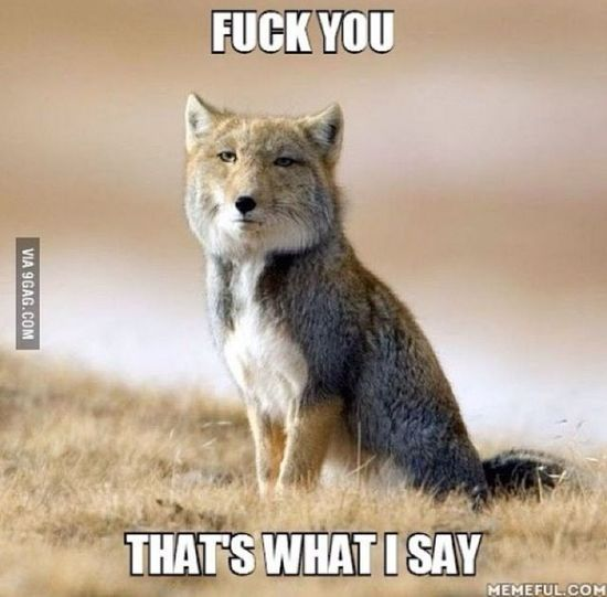 """""""what does the fox say ?"""""""