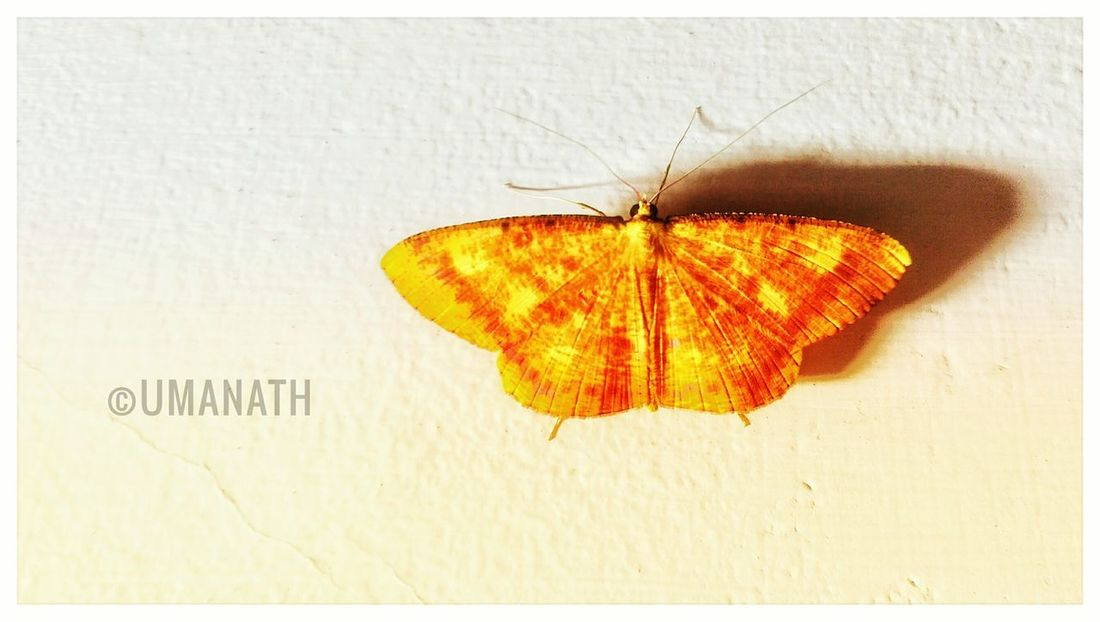 EyeEm Butterfly Beauty in Nature Butterfly EyeEm Best Shots EyeEm Nature Lover Eye White Background Close-up No People Day