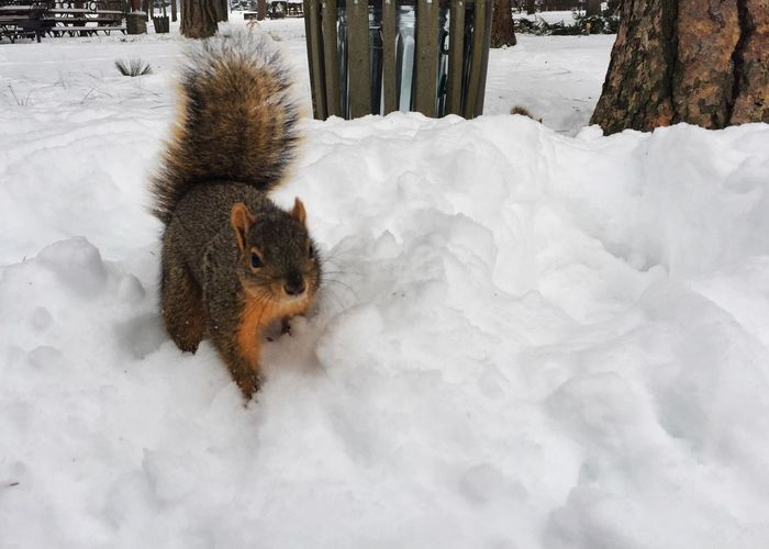 Close-up of squirrel on snow field