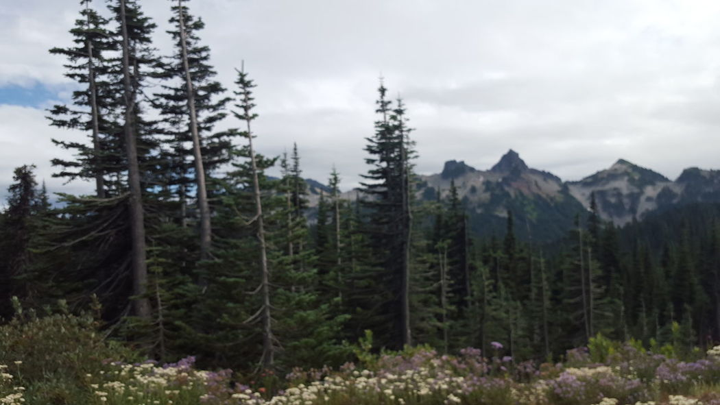 On Our Way Up Mt . Rainer