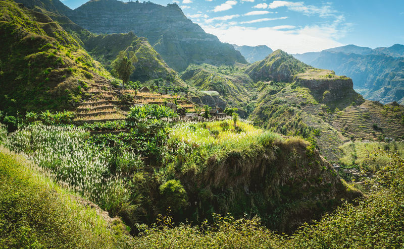 Amazing view of high mountains covered with lush green vegetation. Picturesque banana and sugarcane plantations on the trekking trail to Coculli Santo Antao Cape Verde. Cape Verde Santo Antão Cape Verde Beauty In Nature Day Environment Grass Green Color Growth Idyllic Land Landscape Lash Green Mountain Mountain Range Nature No People Non-urban Scene Outdoors Plant Rolling Landscape Scenics - Nature Sugar Cane Tranquil Scene Tranquility Tree