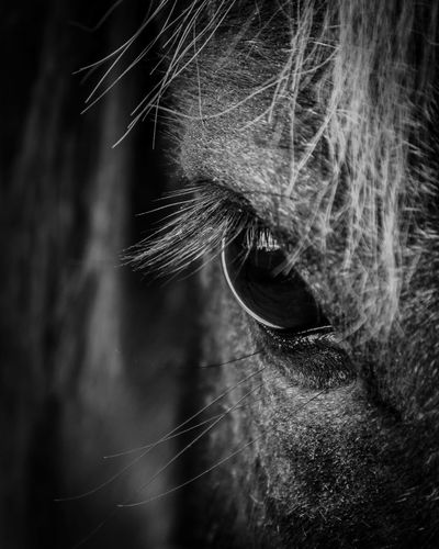 All the pretty horses Horseeye EyeEmNewHere Close-up Mammal One Animal Animal Body Part Domestic Eye Domestic Animals Pets Horse Livestock Animal Eye Vertebrate No People Animal Hair Extreme Close-up Animal Wildlife Herbivorous Whisker Eyebrow First Eyeem Photo