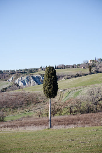 Pienza Pienza (toscana) Paesaggio Crete Senesi Siena Val D'orcia Cypresses Plant Landscape Sky Environment Clear Sky Tree Land Field Scenics - Nature Tranquil Scene Nature Beauty In Nature Tranquility Copy Space Growth Day No People Grass Non-urban Scene Agriculture Outdoors Arid Climate
