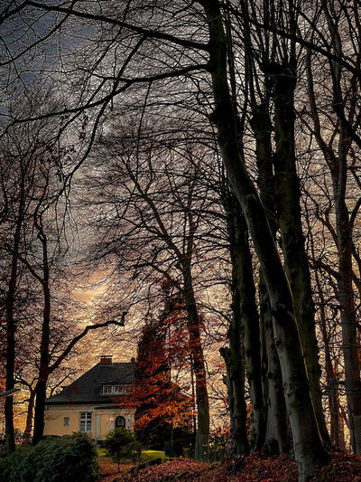 Bare trees and buildings against sky