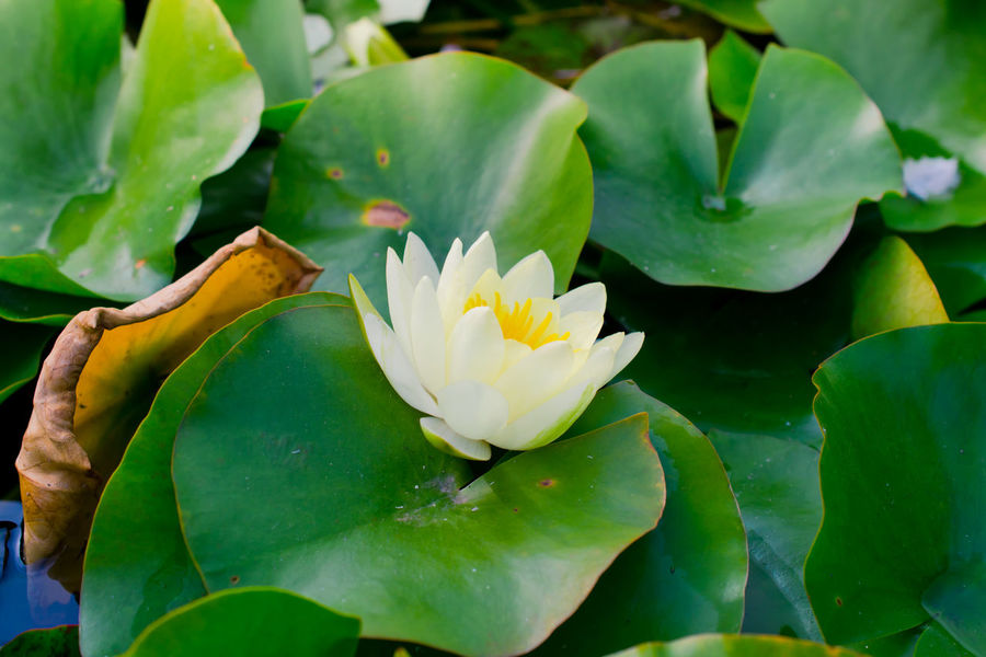 Barcelona Catalonia Catalunya Dreaming Flover Flowers Green Leaves Montjuic Nature Park Pease Pound Quite Quite Place Relax Relaxing Rest Resting Silence SPAIN Spain♥ Water Water Lily