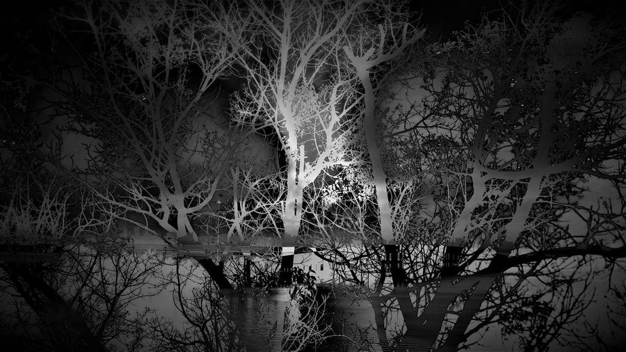 Bare trees in forest at night