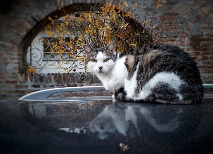 EyeEm Selects Pets One Animal Animal Themes Domestic Cat Domestic Animals No People Mammal Cat Reflection Italy Rustic Hystorical Centre Italian Cat Hystorical Building Cat Eyes Looking At Camera Cat Lovers