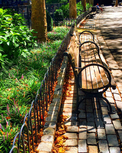 Empty Park Bench Beauty In Nature Bench Day Footpath Formal Garden Green Green Color Growth Lush Foliage Nature Non-urban Scene Outdoors Park - Man Made Space Plant Scenics The Way Forward Tourism Tranquil Scene Tranquility Vacations