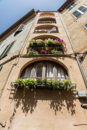 Shot in the city of Siena, Italy Architecture Balcony Building Building Exterior Built Structure Day Flower Flower Pot Flowering Plant Growth House Low Angle View Nature No People Outdoors Plant Potted Plant Residential District Sky Sunlight Window